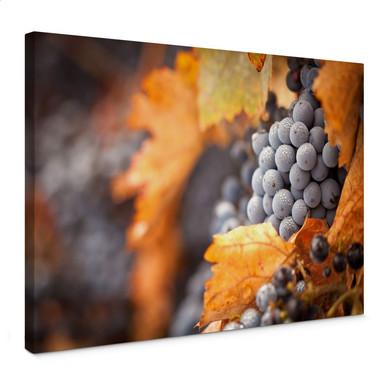 Leinwandbild Wein im Herbst