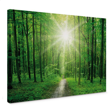Leinwandbild Sunny Forest 01