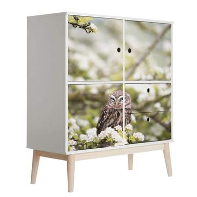 Möbelfolie, Dekofolie - abwischbar - Eule in der Kirschblüte