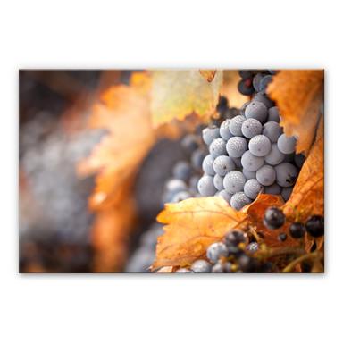 Acrylglasbild Wein im Herbst