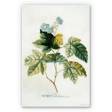 Hartschaumbild Ehret - Rubus