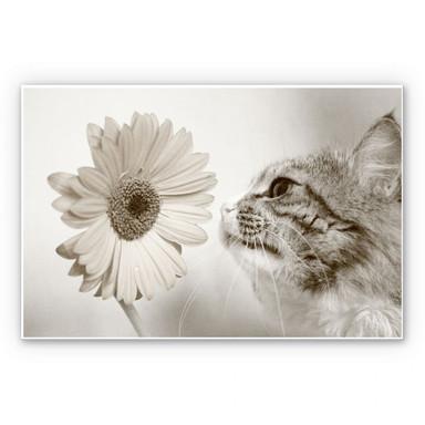 Hartschaumbild Katzenneugier
