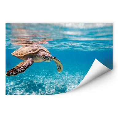 Wallprint Schildkröte auf Reisen