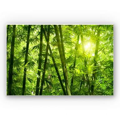 Wandbild Sonnenschein im Bambuswald