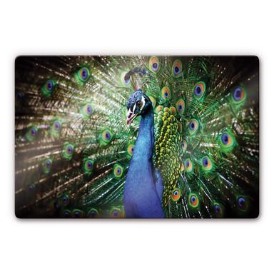 Glasbild Beautiful Peacock