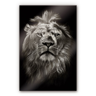 Acrylglasbild Lion