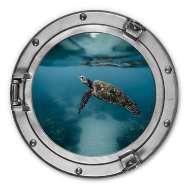 Alu-Dibond 3D-Optik Bullauge - Schildkröte seitlich - Rund