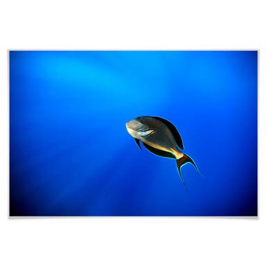 Poster Catta - Deep Ocean