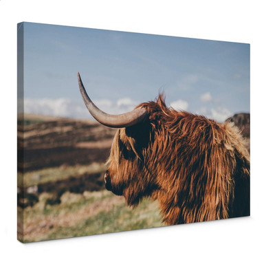 Leinwand Highland Cow 02