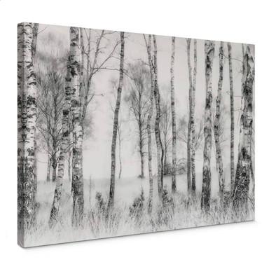 Leinwandbild Talen - Schwarz-weisser Birkenwald