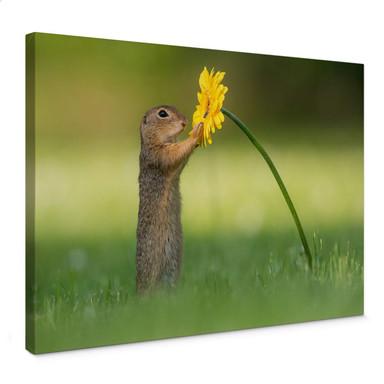Leinwandbild van Duijn - Erdhörnchen hält Blume