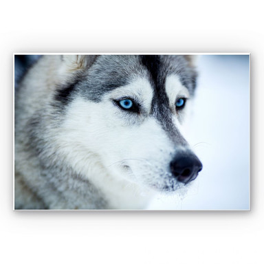 Wandbild Eisblaue Augen