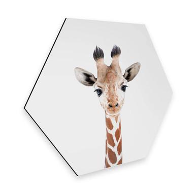 Hexagon - Alu-Dibond Sisi & Seb - Baby Giraffe
