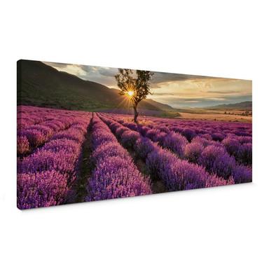 Leinwandbild Lavendelblüte in der Provence - Panorama 01