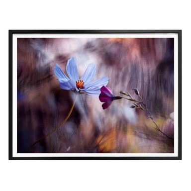 Poster Bravin - Rendezvous zweier Blumen