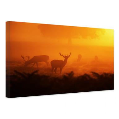 Leinwandbild Hirsche im Sonnenuntergang