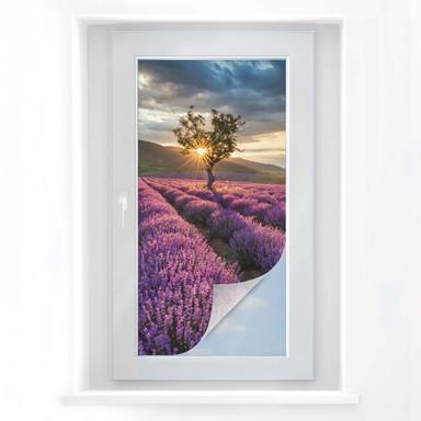 Sichtschutzfolie Lavendelblüte in der Provence - Panorama
