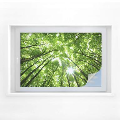Sichtschutzfolie Sunny Forest 02
