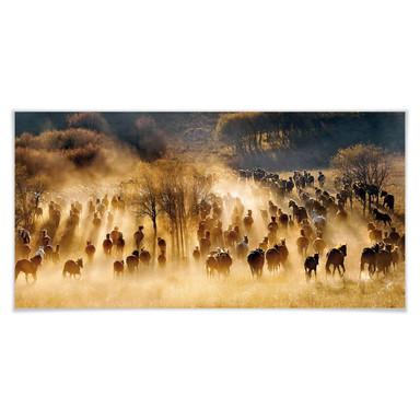 Poster Zhu - Wildpferde in den Bergen - Panorama