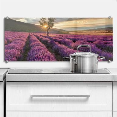 Spritzschutz Lavendelblüte in der Provence - Panorama