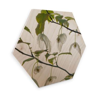 Hexagon - Holz Birke-Furnier - Kadam - Taubenbaum