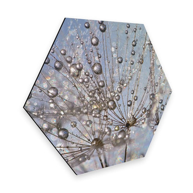 Hexagon - Alu-Dibond Delgado - Wassertropfen in der Pusteblume