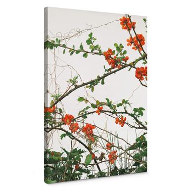 Leinwandbild Kadam - Flora Quittenblüte