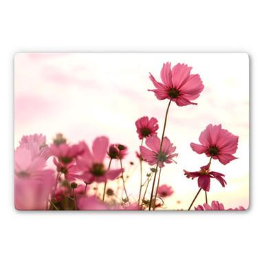 Glasbild Pinke Kosmeen