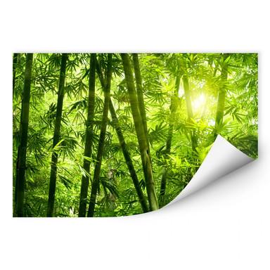 Wallprint Sonnenschein im Bambuswald
