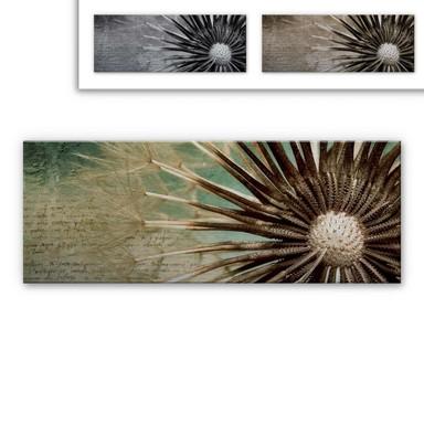 Alu Dibond Bild Pusteblumen-Poesie Panorama