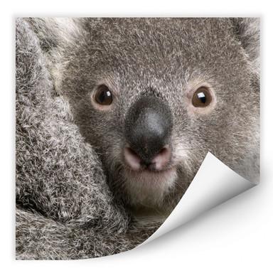 Wallprint Cuddly Koala