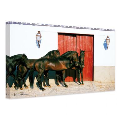 Leinwandbild Boiselle - Andalusierhengste in Spanien