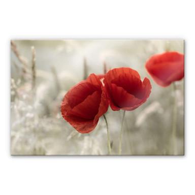 Acrylglasbild Delgado - Mohnblumenpaar