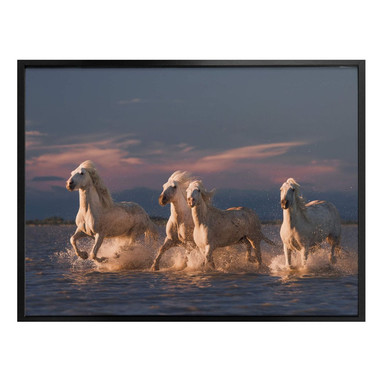 Poster Rostovskiy - Angels of Camargue