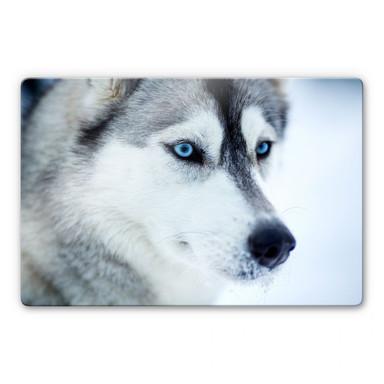 Glasbild Eisblaue Augen