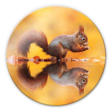 Glasbild van Duijn - Eichhörnchen mit Nuss - Rund