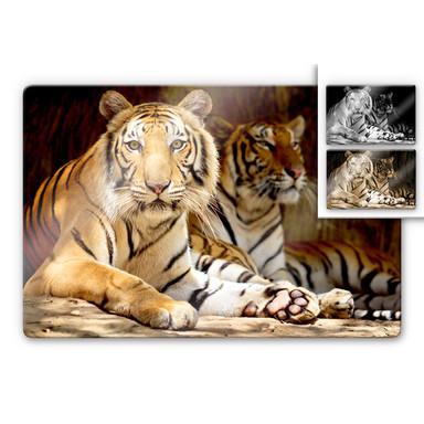 Glasbild Zwei Königstiger