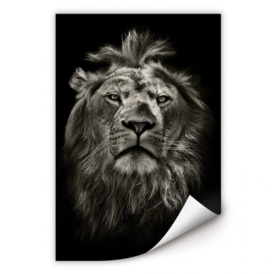 Wallprint Lion