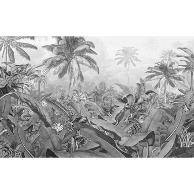 Fototapete Amazonia Black and White