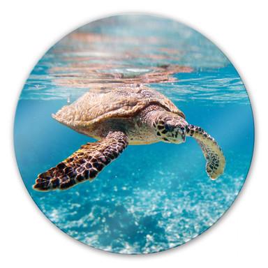 Glasbild Schildkröte auf Reisen - rund