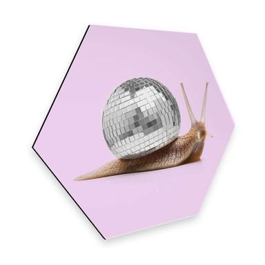 Hexagon - Alu-Dibond Fuentes - Disco Schnecke