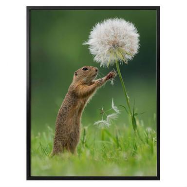 Poster van Duijn - Erdhörnchen mit Pusteblume