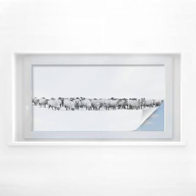 Sichtschutzfolie Schafherde - Panorama