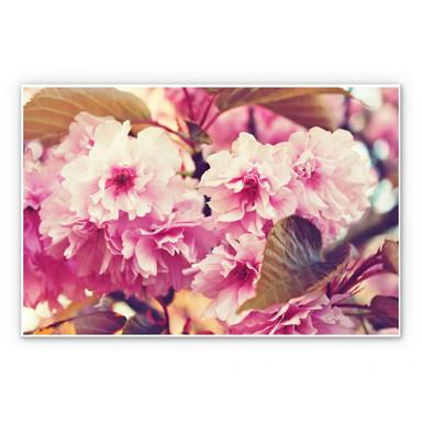 Wandbild Vintage Kirschblüten