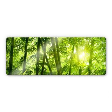 Glasbild Sonnenschein im Bambuswald - Panorama