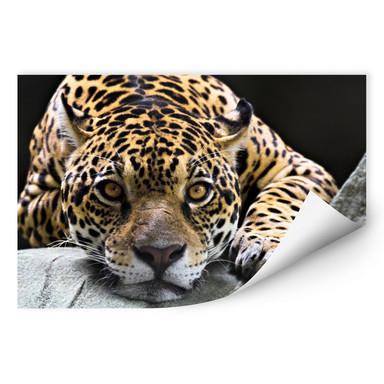 Wallprint Jaguar