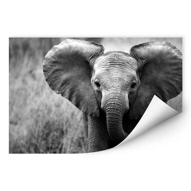 Wallprint Jumbo der kleine Elefant