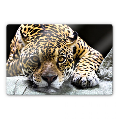 Glasbild Jaguar