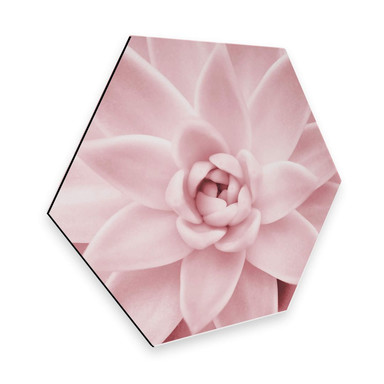 Hexagon - Alu-Dibond - Sisi & Seb - Rosa Sukkulente