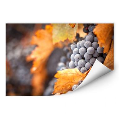 Wallprint Wein im Herbst